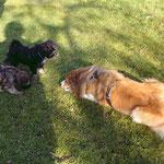 Femi, Yeshi und Dobby