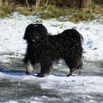 Yeshi im Schnee