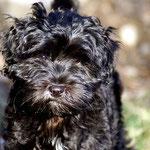 F-Wurf - Yeshi - 14 Wochen alt - in der Sonne