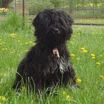 Yeshi - knapp 6 Monate alt