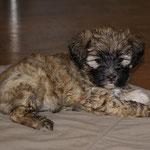 F-Wurf- Fiona - 6,5 Wochen alt