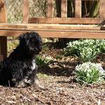 Yeshi im Garten - März 2014