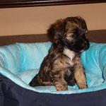 F-Wurf - Femi - 5,5 Wochen alt