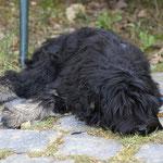 Yeshi im Hessenpark - Frauchen fotografiert. Das kann länger dauern.
