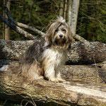 Milka, die kleine Waldfee
