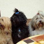 Bya-ra, Kar-mi, Milka und Percy