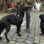 Hundeschule DogFidence - Yeshi - 15,5 Wochen alt