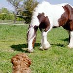 Erster Pferde-Kontakt