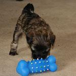 F-Wurf - Hündin Nr. 1 - Femi - 5 Wochen alt