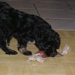 F-Wurf - Yeshi - 8,5 Wochen alt