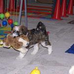 Milka in der Hundeschule, im kleinen Spieleparadies