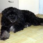 Yeshi - mein schnuffiges kleines Bärchen 17,5 Wochen alt
