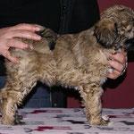 Fiona - F-Wurf - 7,5 Wochen alt