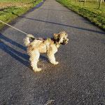 Fiona - Spaziergang in der Sonne