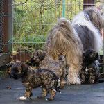 F-Wurf - 6 Wochen alt - mit Mama auf der Terrasse