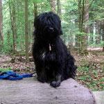 Spaziergang mit Yeshi im Wald - Mai 2014