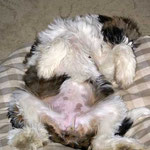 Milka und ihre Kuhflecken - So kam sie zu ihrem Namen