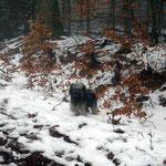 F-chen Neujahrspaziergang im Nebel - 1.1.2015