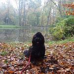 Am Teich im Hirschgarten