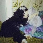 Der kleine Gesar und sein geliebtes Kätzchen