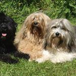 Mein Trio