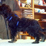 Hundeschule DogFidence - Yeshi in Pose - 15,5 Wochen alt