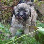 F-Wurf - Fiona im Garten - 8 Wochen alt
