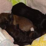 Das Bettchen bekommt frische Laken. Wir sind solange ausquartiert.