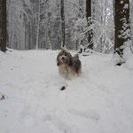Spaziergang mit Milka im winterlichen Wald