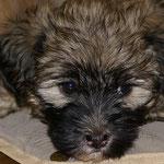 F-Wurf- Fiona - 6,5 Wochen alt - Die süße Maus wartet immer noch auf IHRE neue Familie