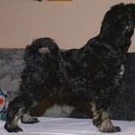 Yeshi in Pose - 11 Wochen alt