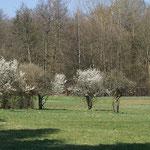 Es grünt und blüht - Ende März 2014