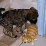 F-Wurf - 8 Wochen alt - Femi - Sag, bist du eine echte Katze?