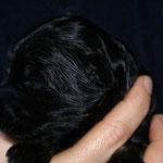 F-Wurf - Rüde Nr. 2 - 2 Wochen alt