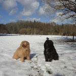 Bya-ra und Kar-mi im Schnee - 25.2.15