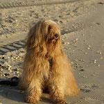 Bya-ra am Strand in der Morgensonne