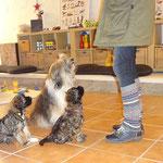 Mon-sha und Femi mit Mama Milka in der Hundeschule DogFidence