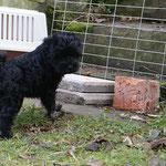 F-Wurf - 8 Wochen alt - Yeshi - Kein Bock mehr auf Garten. Ich geh dann mal.