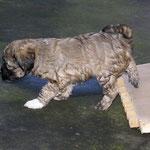 F-Wurf - Fiona - 6 Wochen alt