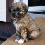 F-Wurf - Fiona - 8,5 Wochen alt