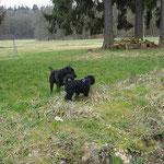 Yeshi trifft Mamas Freund Balou