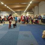 Yeshi im Ring - Gießen 2014 - Jugendklasse Tibet-Terrier Rüden