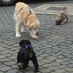 Hundeschule DogFidence