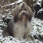 Milka im verschneiten Wald