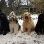 Yeshi, Kar-mi, Milka und Bya-ra im Schnee -  Februar 2015