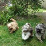Rennen und Toben: Bya-ra, Milka und Percy