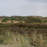 Dünen- und Heidelandschaft