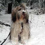 Milka im Schnee Ende Dezember 2014
