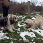 Milka und Fiona beim Spielen