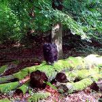 Yeshi im Wald